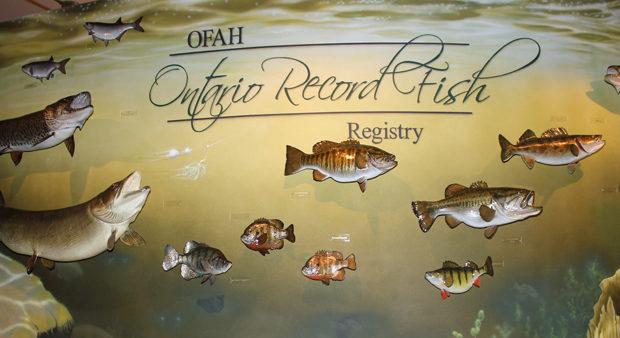 unique fish records - wall of ontario record fish