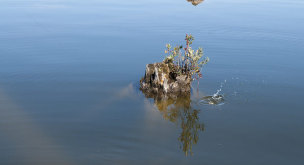 dock alternatives - a stump in the water