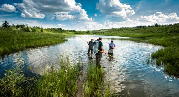 citizen science - three researchers in a lake