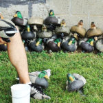 cleaning-decoys-duck