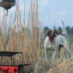 training a gun dog