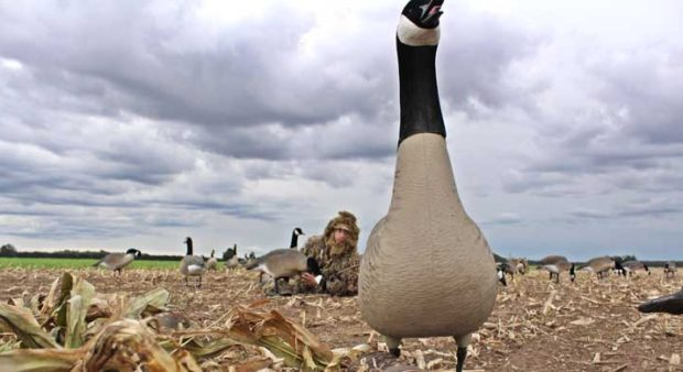 attitude - goose decoy in a field