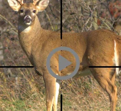 deer in crosshairs