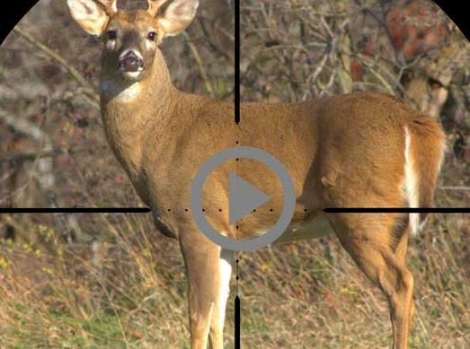 deer in crosshairs