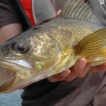 Fishing-walleye