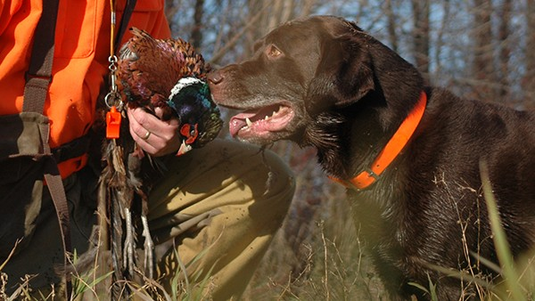 hunter with bird and dog