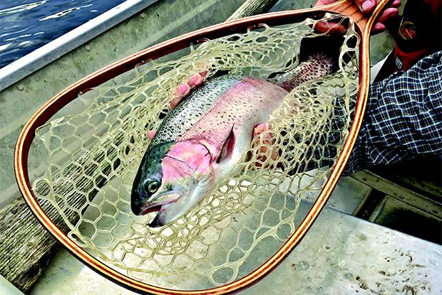 A trio of trout