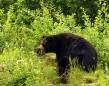Spring black bear hunt
