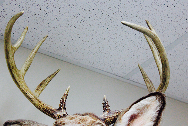Advanced Taxidermy antlers stolen