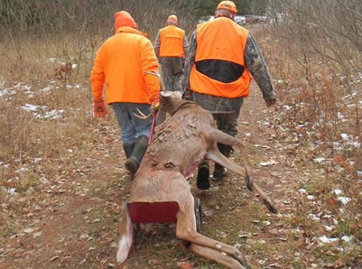 moving deer