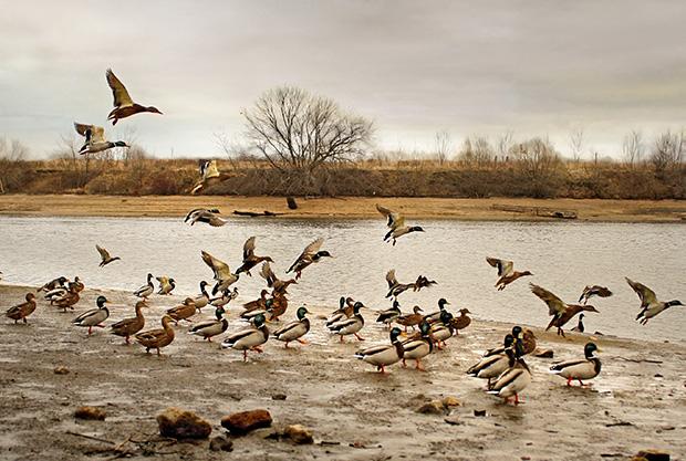 Migratory Birds Act
