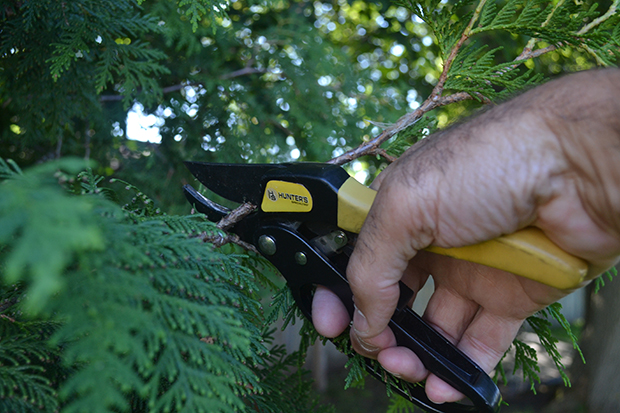 ground bling tips - pruners
