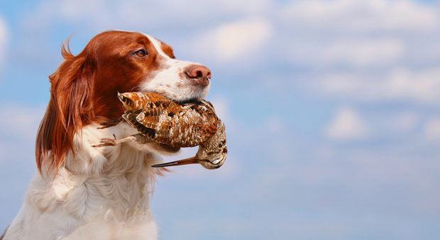 mysteries - a dog holding a bird in it's mouth