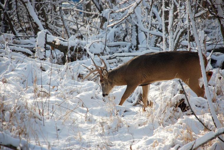 January - deer-in-woods-snow