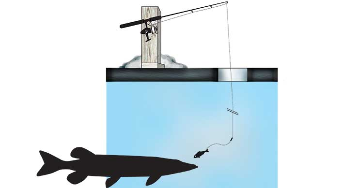 walleye moves - illustration of fishing tactics