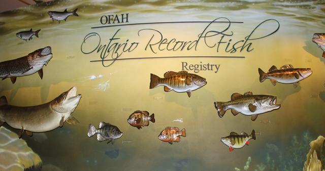 wall of ontario record fish