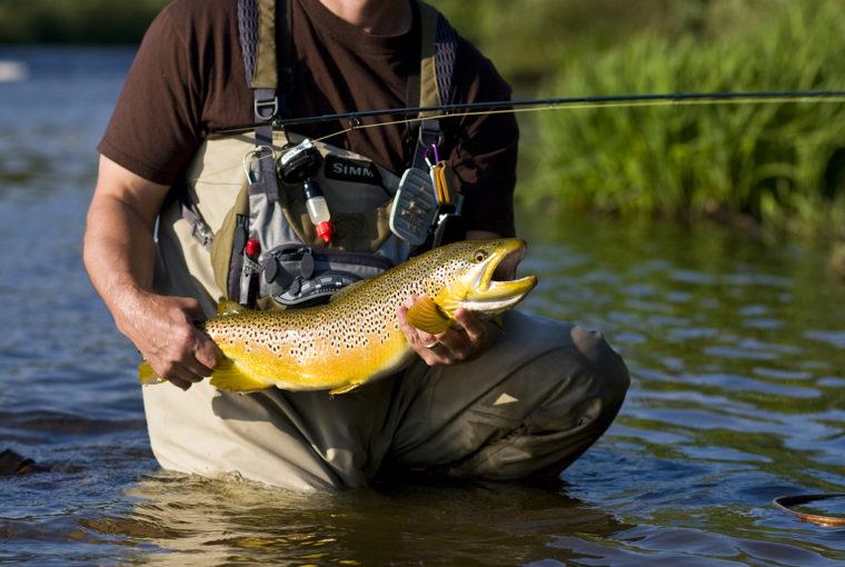 trout lies