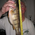 Rick Noseworthy caught this jumbo perch in Lake Huron using a vertical spinner rig.