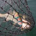 muskie movements - Catching a muskie