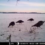 turkey-trail-cam