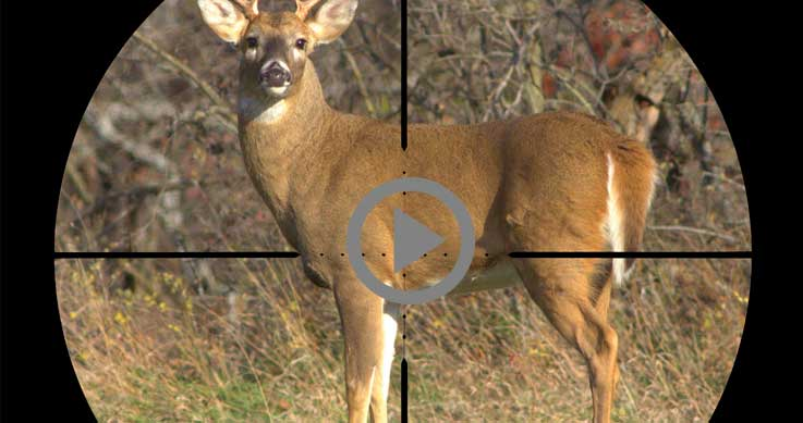 pattern - deer in crosshairs