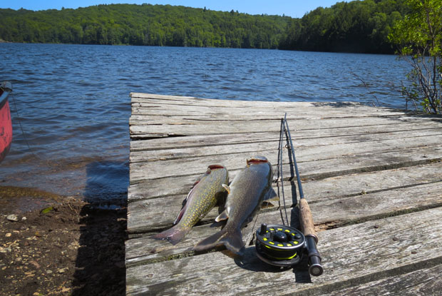 fish on the dock