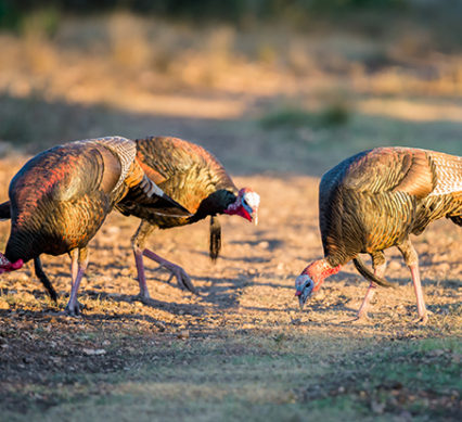 turkey hunting changes