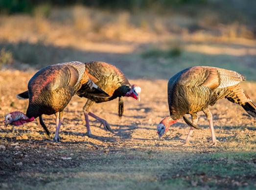 turkey hunting changes