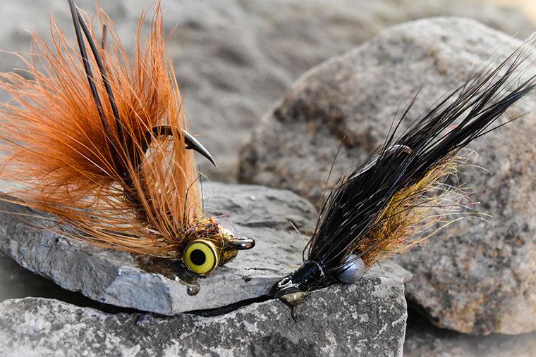 carp fly - fly bait