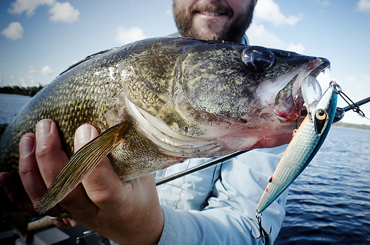 jerked - caught walleye