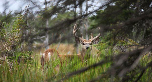Quebec hunting