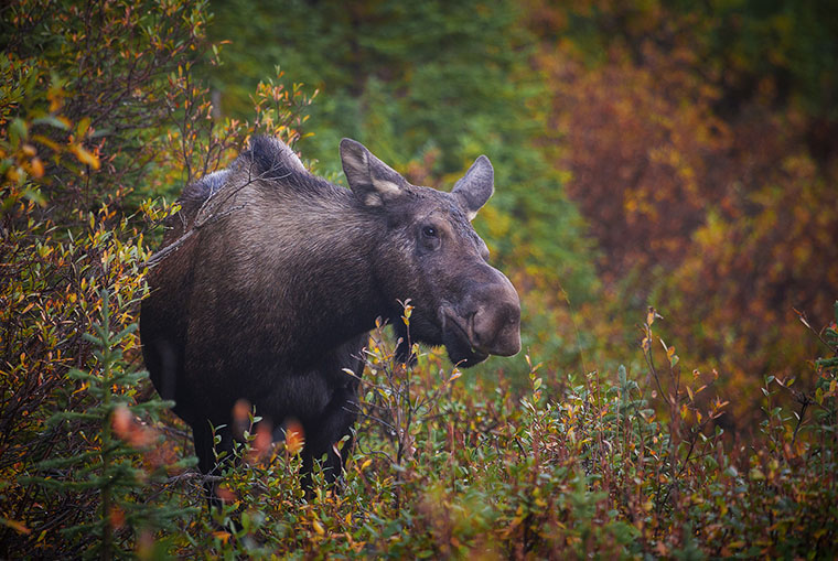 moose validation numbers