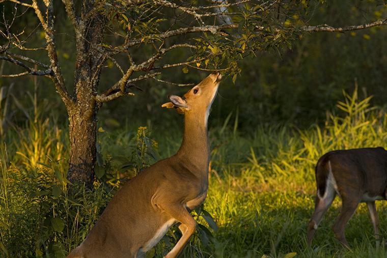 deer property