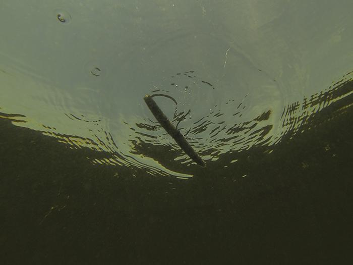 bass baits